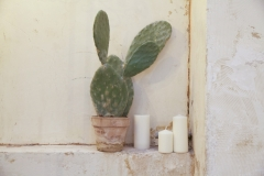 candle and cactus